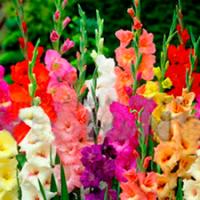 Flores de Corte
