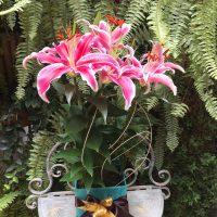 Vasos Plantados